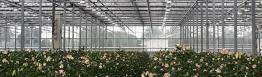 Light restriction screens in Dutch greenhouse